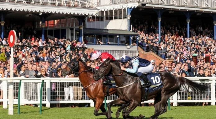Runners & Riders – Horse racing tips for Saturday 14th September 2019 – The Steeple Times' horse racing tips with an analysis of the top tipsters and their selections for the Ayr Gold Cup Festival.