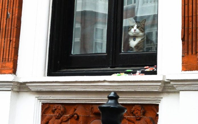 The Cat That Didn't Get The Cream – Tedious pillock Julian Assange – Though Julian Assange's cat may have looked on smugly yesterday, all its owner achieved was to make himself appear arrogant and ridiculous – Friday 19th May 2017, photograph by Matthew Steeples