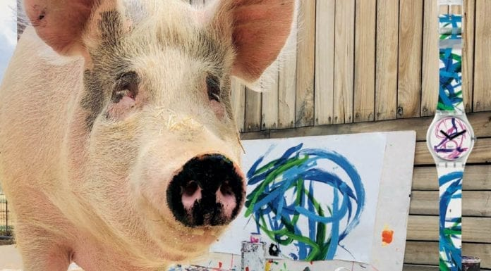 The Brilliance of Pigcasso – Painting pig named Pigcasso sells works for thousands; one has been turned into a watch face for Swatch.