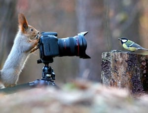 Picture of the Week: Snapped by a squirrel