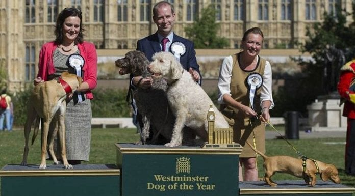 The Priorities of Parliament – MPs dog show cancelled, do some work – As the annual dog show for MPs is cancelled, perhaps it is time MPs actually did something useful – put a stop to the chaos of Brexit.