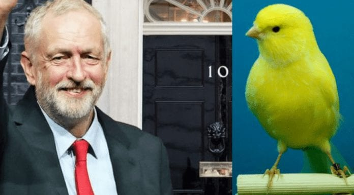 """During Coronavirus 'The Canary' Claims Corbyn Still Hasn't Croaked – That 'The Canary' is still lauding Jeremy Corbyn as """"the best Prime Minister we never had"""" about sums up that sorry shower of a rag's grasp on the current state of British politics."""
