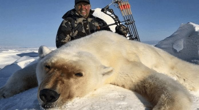 Berkoff on Bears & Barbarians – Steven Berkoff on a polar bear slayer – Acclaimed actor, writer and producer Steven Berkoff responds to an article in 'The Times' featuring an image of a sub-human barbarian with a polar bear he'd slayed.