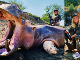 Hippo Harridan 2021 – Larysa Switlyk – Not content with butchering bears, barbarian bitch Larysa Switlyk has headed to Africa to harm hippos; this harridan must be stopped.