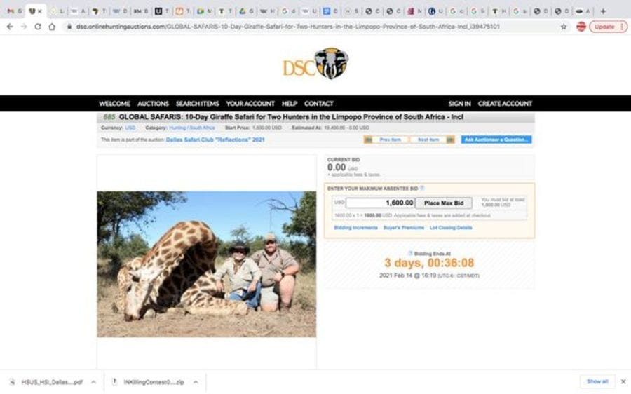 "Diabolical in Dallas – Dallas Safari Club auction black rhino killing – As the Dallas Safari Club disgustingly auction off an ""opportunity"" to kill an endangered black rhino, we urge readers to support our petition to put a stop to their shameless poster girl Larysa Switlyk."