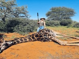 Ban Merelize van der Merwe from Facebook in 2021 – Change.org petition started by 'The Steeple Times' seeking to ban giraffe slaying monster Merelize van der Merwe from Facebook goes viral with over 4,000 signatures in less than 24 hours.