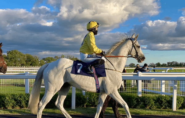 """Roy Rocket (AKA 'The King of Brighton', 2010 – 2021) – Legendary racehorse Roy Rocket was a wildcard punters' favourite at Brighton. He was trained by John Berry and was allowed to do as he wanted at his yard. """"Roy's the boy"""" was regularly cheered to success by an octogenarian with a flask full of gin."""